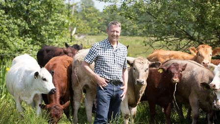 Jeremy Thickitt with grazing cattle Picture: KEIRON TOVELL