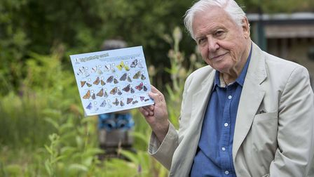 Sir David Attenborough launches the Big Butterfly Count Picture: HELEN ATKINSON