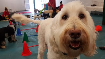 Days out for dogs at the Suffolk Canine Creche in Martlesham. PICTURE: RACHEL EDGE
