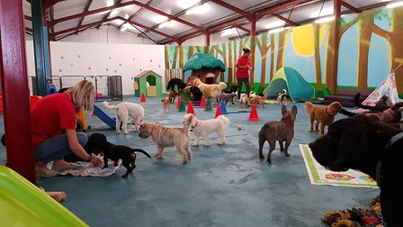 Fun and play at Suffolk Canine Creche in Martlesham. PICTURE: RACHEL EDGE