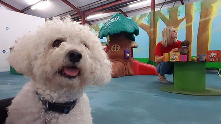 Dogs of all shapes and sizes Suffolk Canine Creche in Martlesham. PICTURE: RACHEL EDGE