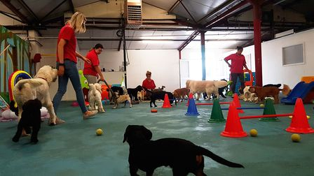Room to play at Suffolk Canine Creche in Martlesham. PICTURE: RACHEL EDGE