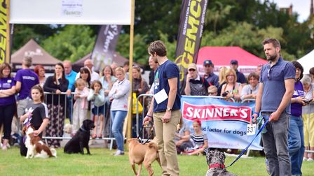 Thousands of people flocked to Helmingham Hall for 2016's Suffolk Dog Day Picture: SARAH LUCY BROWN