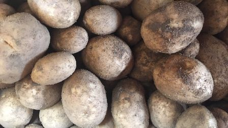 Potatoes grown at James Foskett Farms Picture: SARAH CHAMBERS
