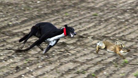 Hare coursing hits its peak during the winter months Picture: John Hocknell