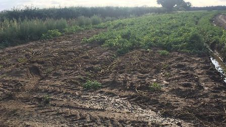 The latest incidents come after three quarters of a tonne of potatoes were stolen from a field in Ta