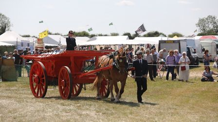 Hermaphrodite wagon with Suffolk in ring at Weeting Steam Rally Picture: HERITAGE HORSES