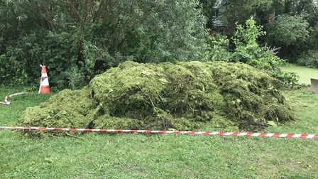 A pile of weed that was removed from the River Colne at Castle Park in Colchester Picture: ENVIRONME
