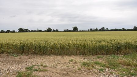 The site near Southolt which is earmarked for new poultry sheds Picture: SONYA DUNCAN