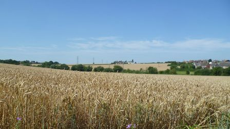 Mill Mount Field from St Mary's church, looking towards Poplar Hill Picture: MARK LANGFORD