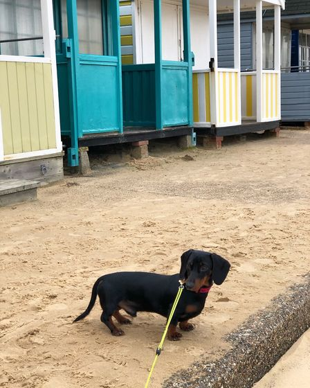 Hector near the Southwold beach huts Picture: LAURA SUMMERS