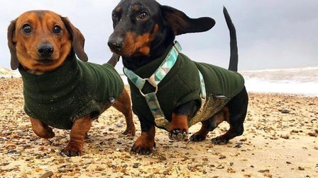 Hector and another dachshund on the sands at Southwold Picture: LAURA SUMMERS