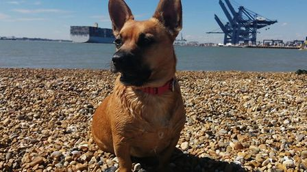 Darcy loves a walk along Felixstowe View Point and the nature reserve near the Fort. Picture: Shanic