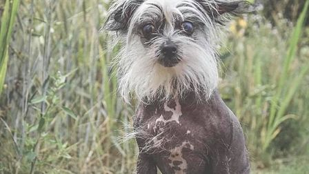 Hairless Chinese crested Morticia has found a new home after being at the RSPCA'�s Danaher Animal Ho