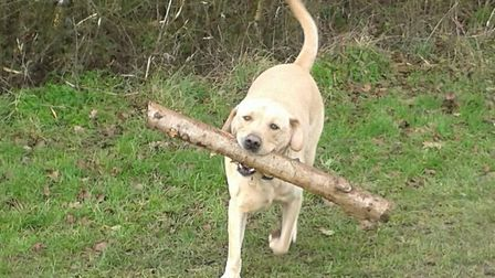 Charlie playing in fields at Combs Picture: CARL FARROW