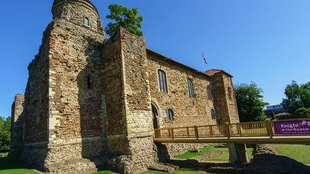 The Colchester Castle Sycamore is another finalist in the Woodland Trust's Tree of the Year competit