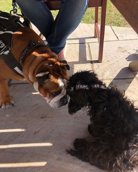 Bulldog Benson meets Folk Cafe's puppy Edie on our visit.
