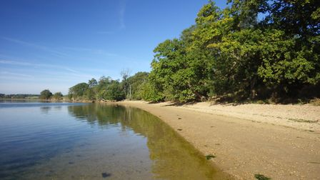 Woodland coming up to the shore at Harkstead