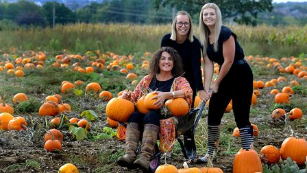 Find out where you can go pumpkin picking across Suffolk and north Essex. PICTURE: Andy Abbott