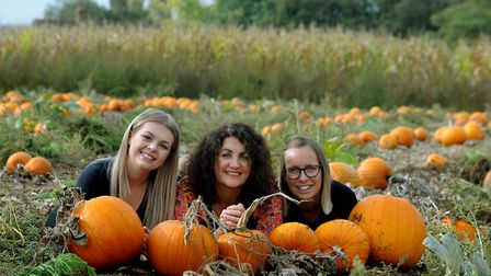 The Gee Wizz Charity Pumpkin Patch and Maize Maze is one of the places to go pumpkin picking this fa