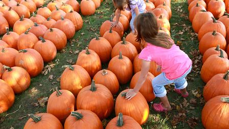 Get into the Halloween spirit at one of these exciting events