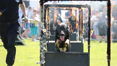 All About Dogs, the canine talent show and adventure experience returns to Trinity Park, Ipswich, th