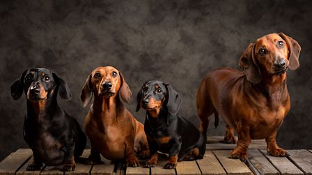 Percy, Wilson, Olly & Eddie are looking forward to the event Picture: BOB FOYERS