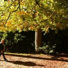 A beautiful autumn morning at Fairhaven woodland and water gardens. Picture: Archant