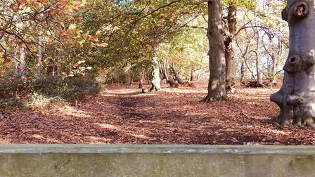 Sutton Hoo in autumn. Picture: TRACY EXCELL