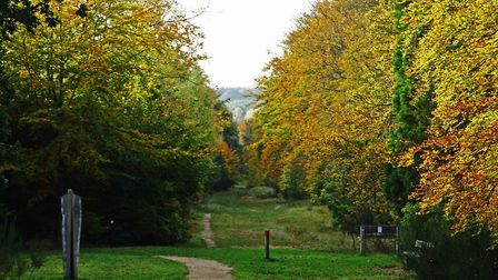 Brandon Country Park. Picture: Jason Whichelow