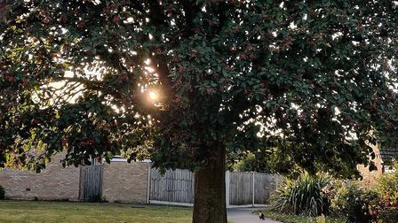A tree in Leiston bursting with autumn berries. Picture: TERRY REVELL