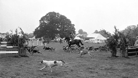 Who let the dogs out! Horses running with hounds in the maiin ring at the Tendring Show in 1974 Pic