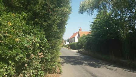 Overgrown hedges and trees can be a danger to road users Picture: SUFFOLK HIGHWAYS