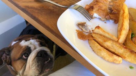 Benson the Bulldog was eager to help out with the chips at The Fox at Bulmer Tye!