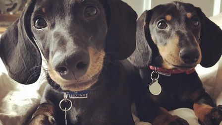 Rambo the sausage dog (left) died after being hit by a car - Rose (right) is now recovering from a m