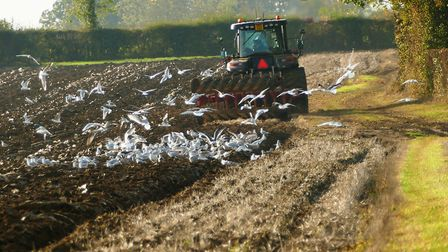 Farmers are facing up to some stark realities Picture: PAMELA BIDWELL