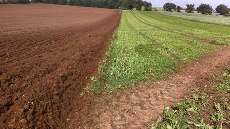 Is there set to be a shift away from growing food to other ventures on farms? Picture: ANDREW BLEN
