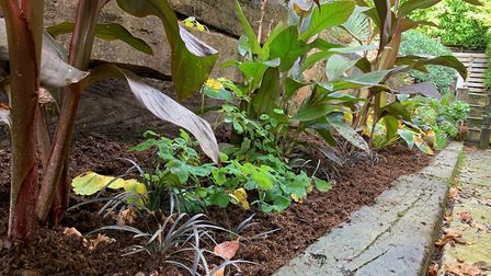 You can apply PlantGrow at any time of the year to help your plants look the best they can. Picture: