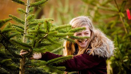 The whole family can have fun picking a Christmas tree at Blackthorpe Barn. Picture: TOM SOPER