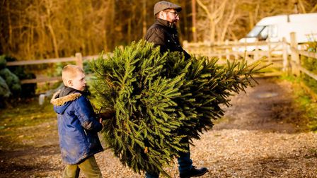 Pick your own real Christmas tree at Blackthrope Barn Picture: TOM SOPER