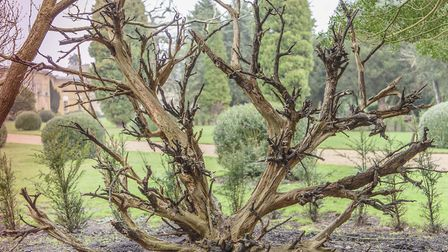 The stumpery in the grounds will be lit up for the new trail. Picture: JIM WOOLF/THE NATIONAL TRUST