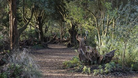 The grounds and stumpery will be lit up for the new winter experience at Ickworth House. Picture: JI