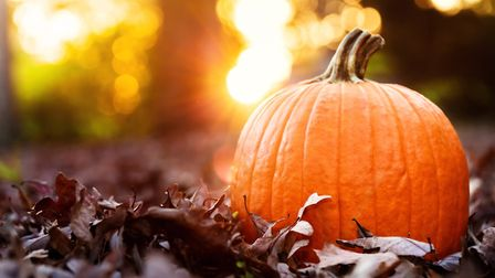 A pumpkin pageant will be one of the attractions at the Arc shopping centre in Bury St Edmunds' Hall