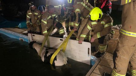 Firefighters work to lift the trapped pony out of the pool Picture: ESSEX COUNTY FIRE & RESCUE SERV