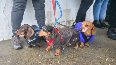 The Southwold Sausage Dog walk was rained off in October, but is hoping for better luck this weekend