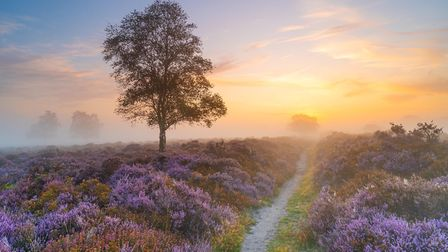 Westleton Heath, winner of the Simply Suffolk category Picture: AMANDA BURGESS