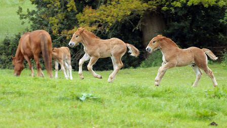 The number of foals born rose in 2019 Picture: LESLEY KEY
