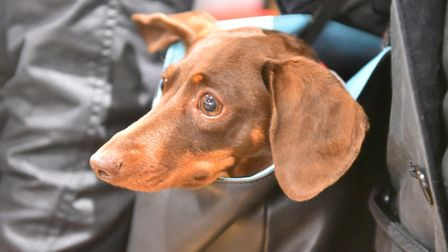 The Southwold Sausage Dog walk was hit by rain in October - but is returning this weekend Picture: J