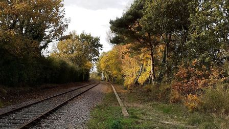 Network Rail plans to cut back the vegetation by the track in the middle of the night - even though