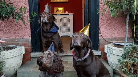 Four legged friends enjoying their day at the most dog friendly pub in the East of England. Picture